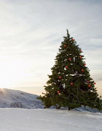 Новогодние утренники в горах на «Роза Хутор» Плато 1170 м