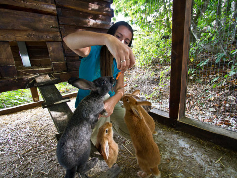 Какое счастье покормить кроликов с рук