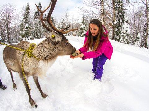 Северные олени в Красной Поляне Сочи