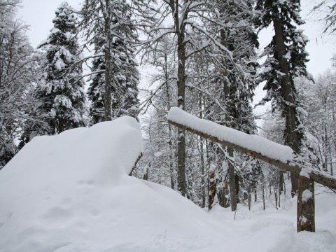 Сноупарк в лесу