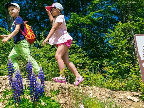 Веревочный парк для детей и взрослых Сочи